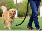 家里有养狗的bob娱乐下载地址人快看,下个月正式实施